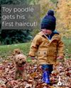 Baby Toy Poodle Puppy Get His First Haircut!
