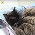 Momma Cat Adopts EIGHT Hedgehog Babies!