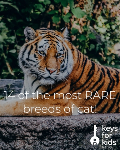 14 Most RARE Cats in the WORLD!
