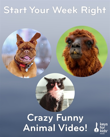 Crazy Funny Animals - Start Your Week Right!