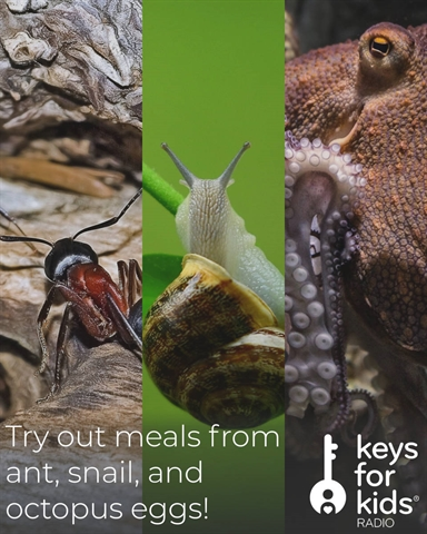 Try a Meal with an Ant Egg, Snail Egg, or an Octopus Egg!