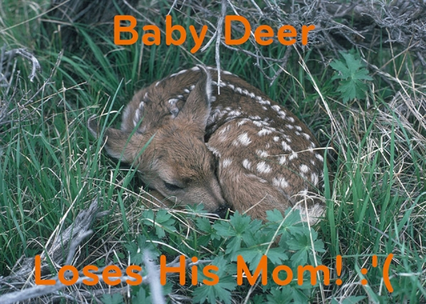 Baby Deer Loses His Momma :(
