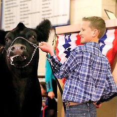 11-Year-Old Sells a Cow for $106,000, Gives Back to God