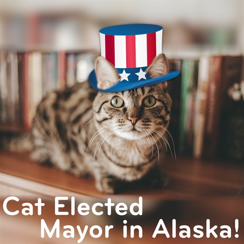 This CAT Elected MAYOR