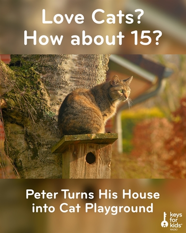 Cat Playhouse: 15 Cats and 22 Litter Boxes!