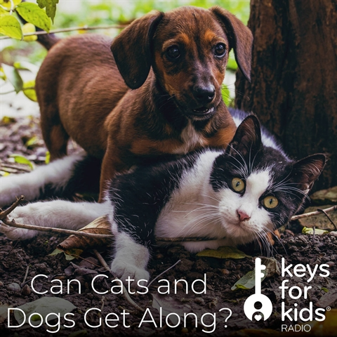 Can a CAT and DOG live together??