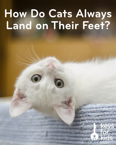 How Do Cats Always Land on Their Feet?