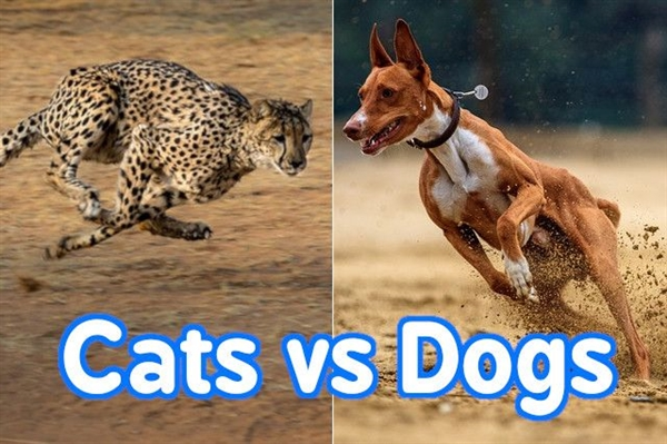 Cats vs Dogs: Who's Faster on Foot?