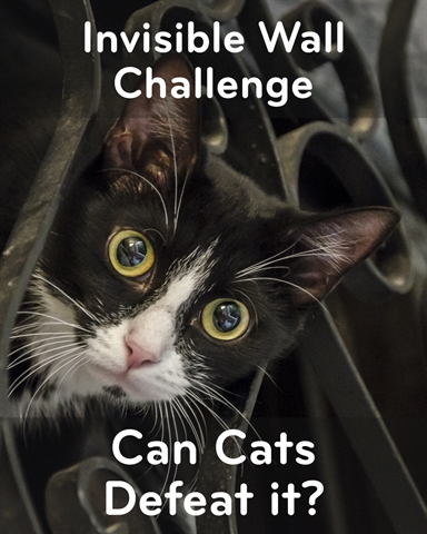 Cats and the Invisible Wall Challenge!