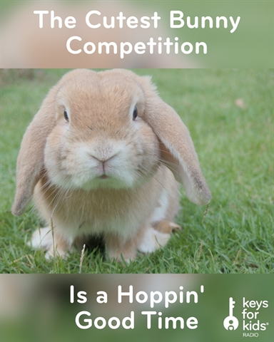 The Cutest Bunny Competition EVER