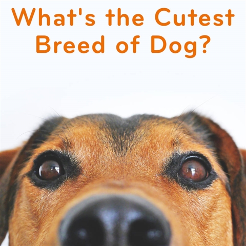 Are THESE the Top 10 Cutest Dog Breeds?