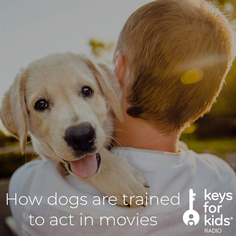 How Dogs Get Trained for Movies