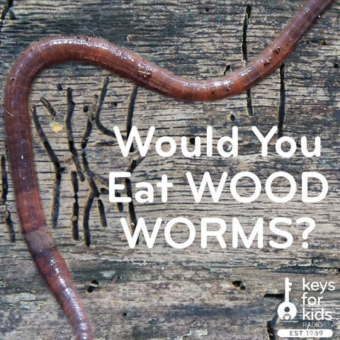 Would You Eat Wood Worms?