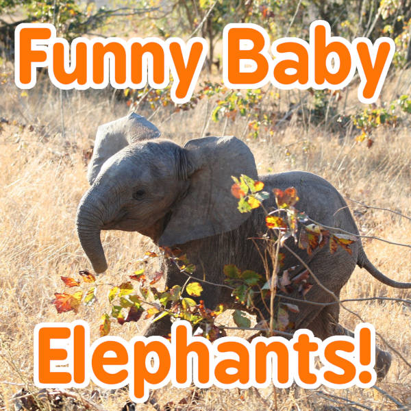 Super Funny Baby Elephants!