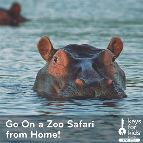 Go On a Zoo Safari from Home!