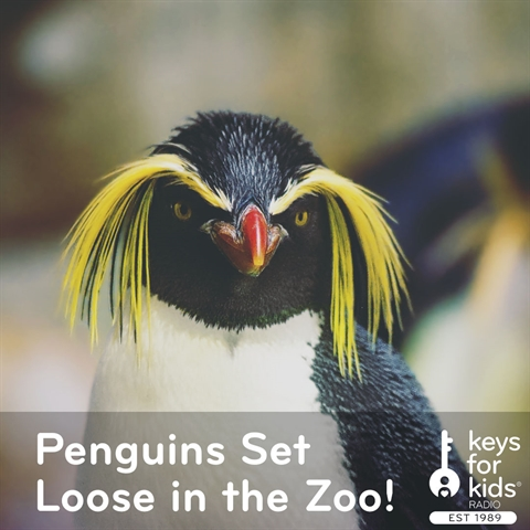 Penguins Set Loose in the Zoo!