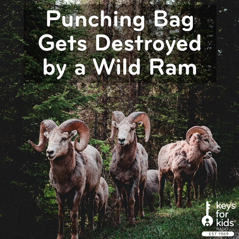 Punching Bag Gets Destroyed by a Wild Ram!