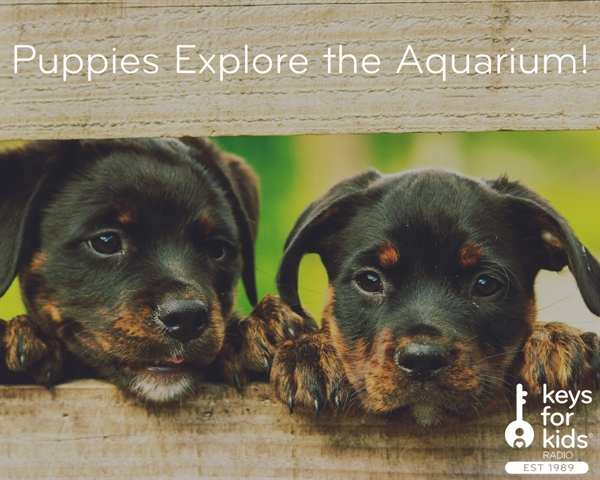 Puppies Exploring the Aquarium!