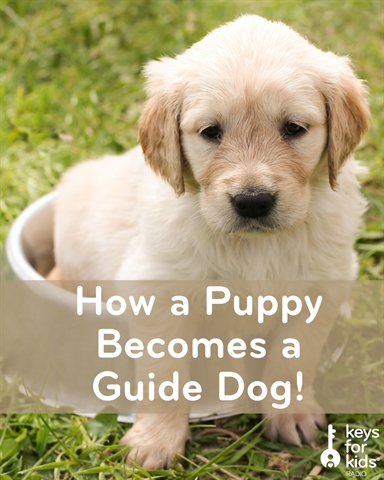 Training a Puppy to be a Guide Dog!