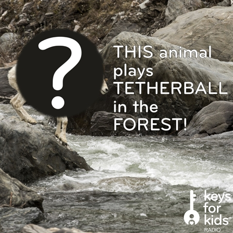 THIS Animal plays tetherball in the FOREST