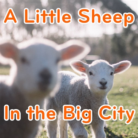 A Shepherd in the Big City