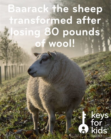 Sheep TRANSFORMED after losing FIVE YEARS of wool!