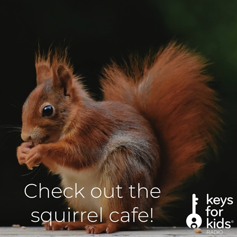 Tiny Little Restaurant for Squirrels!