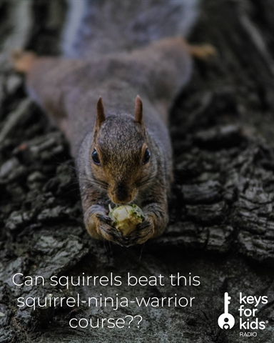 Can Squirrels Beat This Squirrel Ninja Warrior Course??