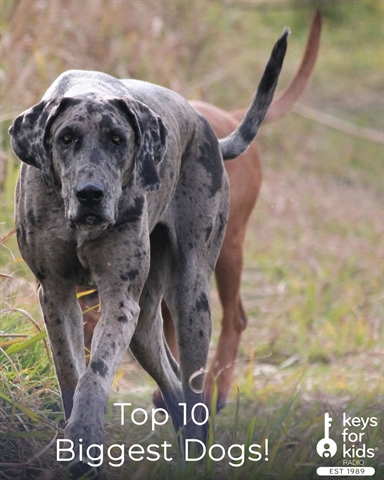 What Are The Top 10 Biggest Dogs in the World?