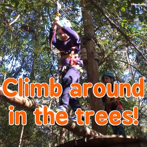 Climb Like a Monkey in the Trees!