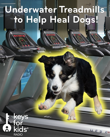 Doggy Treadmills - UNDERWATER!