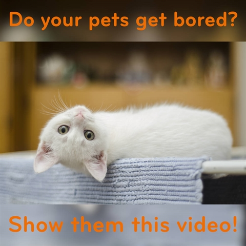 An 8 Hour Video...FOR YOUR CATS!