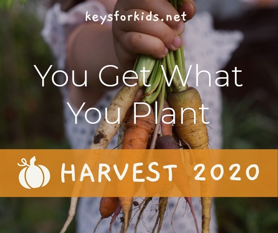 You Get What You Plant - Harvest Week!
